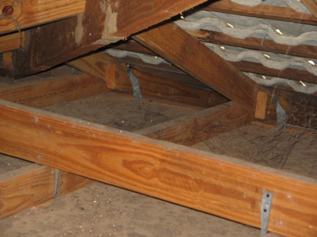 Termites attacking roof trusses