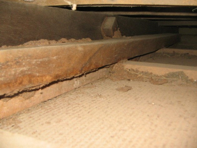 Termites eating ceiling joist